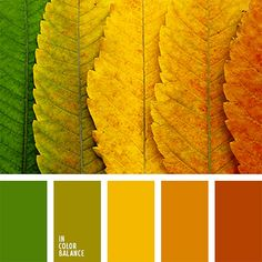 Example of a warm Summer palette. Photo pintrest