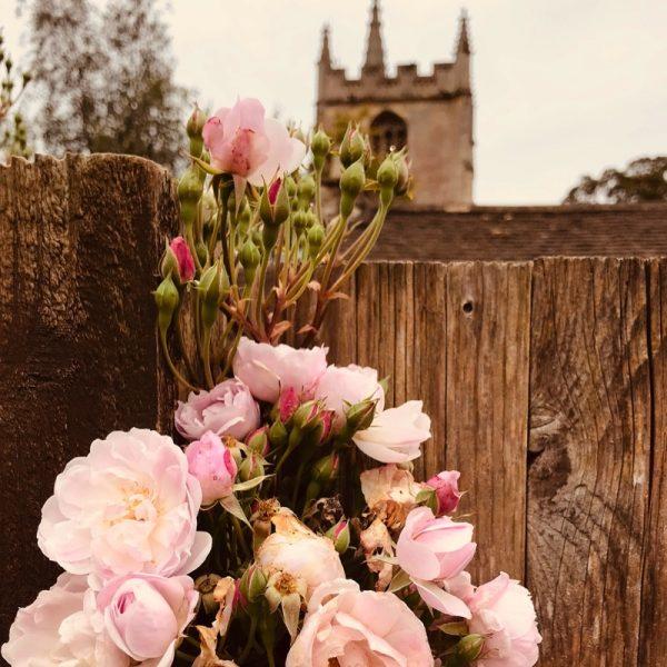 Native rose, England Photo By Linda Saul
