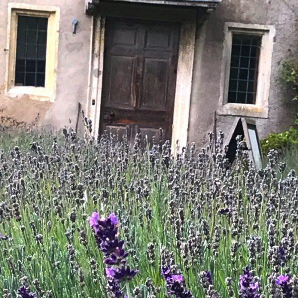 Lavender field. Photo by Linda Saul