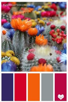 Example of warm palette Photo Pinterest